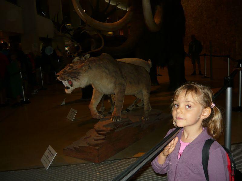 27 Juill 2011 130 E tigre dents sabre